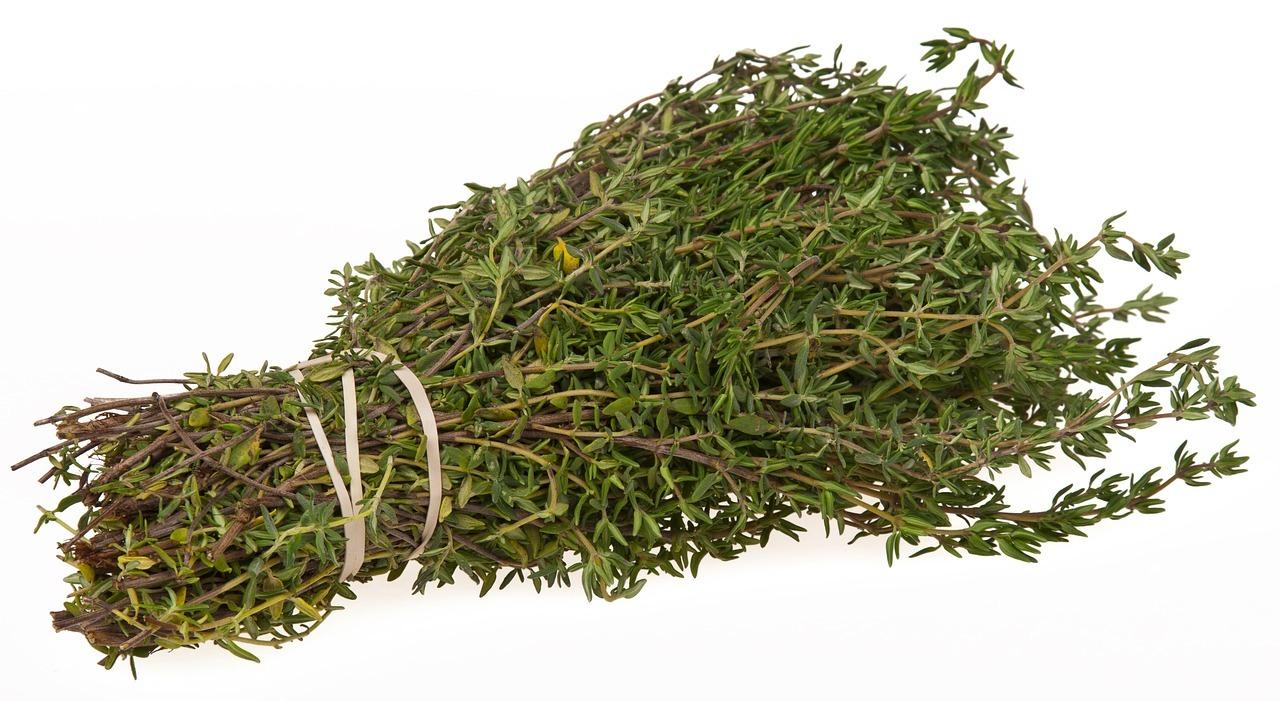 Thymian – aromatisches Gewürz und wirkungsvolles Heilmittel