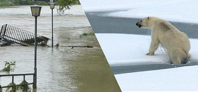 Klimawandel, Eisbär, Hochwasser,