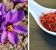 Safran Gewürz Krokus sativus