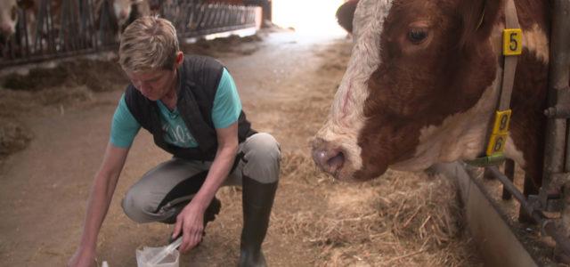 ZDF-Doku: Killer-Keime aus dem Stall