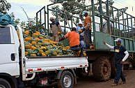 Mediatheken-Tipp: die Ananas & der Preis der süßen Früchte