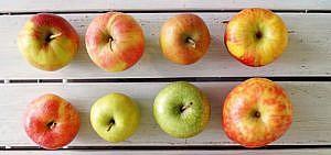 Apfelsorten bestimmen erkennen Äpfel Deutschland