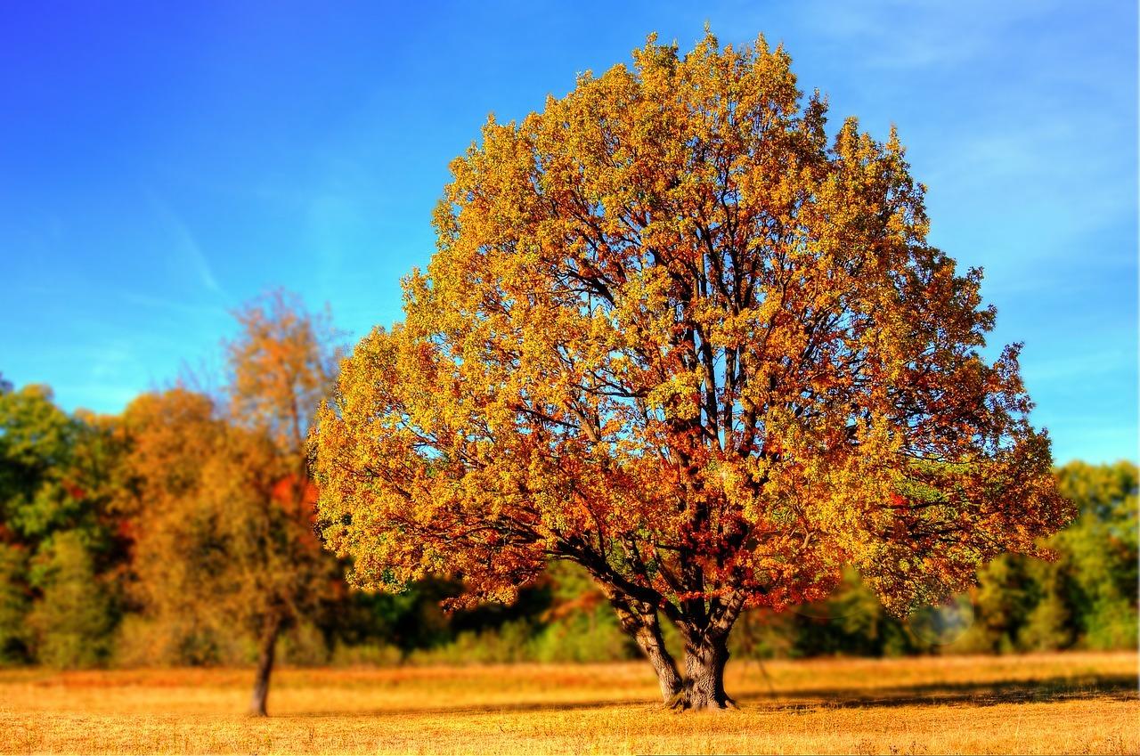 Der Herbst hat auch seine schöne Seiten.