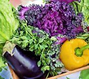 Es gibt so viele Salatsorten, dass du das ganze Jahr etwas Grünes zu essen hast.