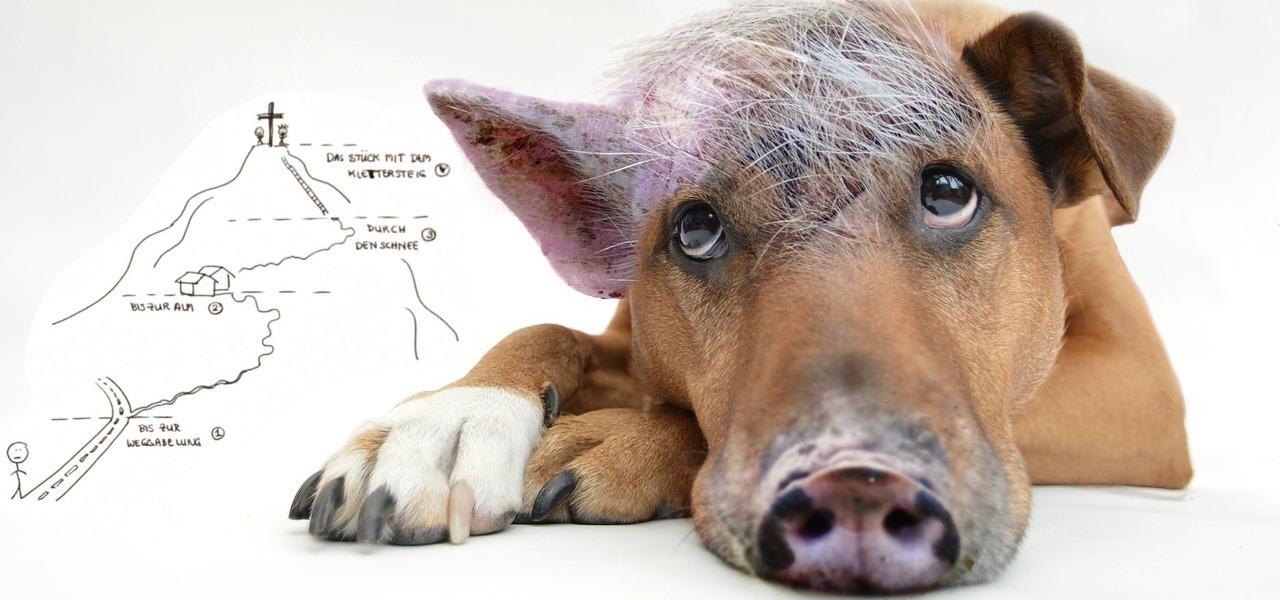 Inneren Schweinehund überwinden Selbstmotivation