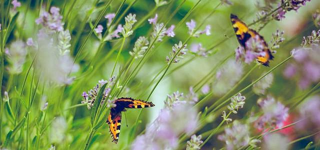 Bildergebnis für Bilder zu INsektensterben