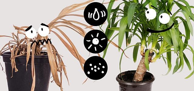 Pflanzen nicht töten, Zimmerpflanzen