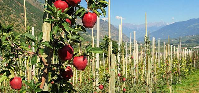 Apfelanbau in Südtirol