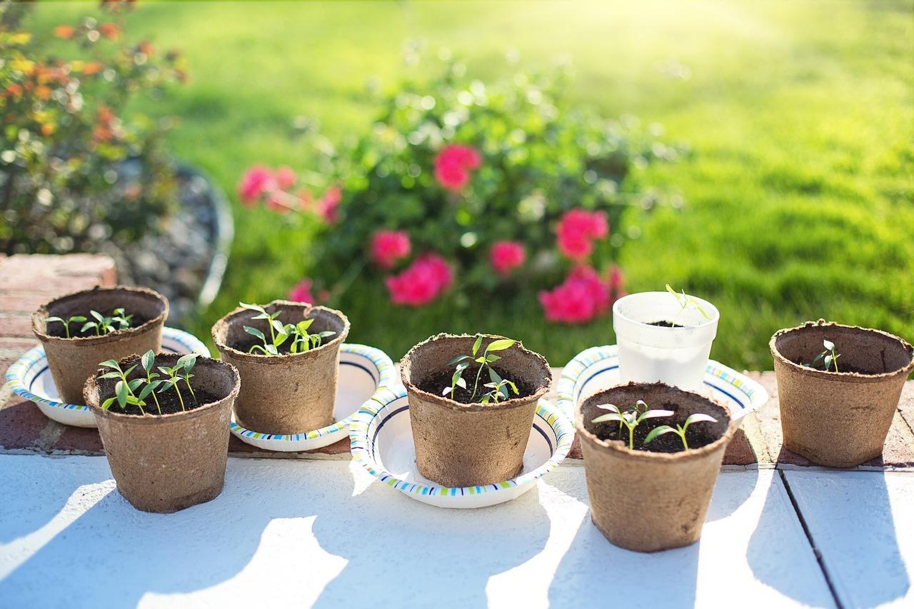 Berühmt Paprika pflanzen: Alles zu Anbau, Pflege und Ernte - Utopia.de @UL_23