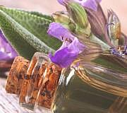 Aus der Heilpflanze Salbei lässt sich ein kraftvolles, ätherisches Öl gewinnen