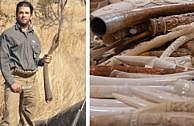 USA erlauben Import von Elefantentrophäen – die Begründung macht fassungslos