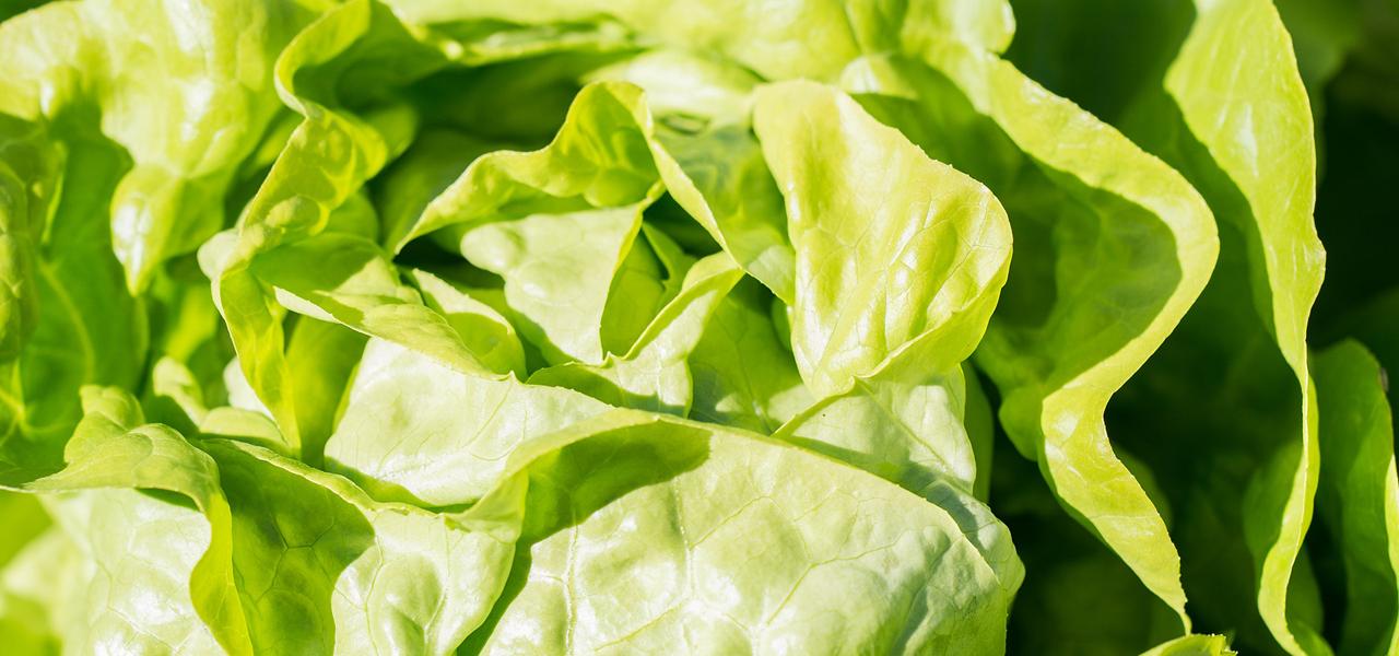 nicht einfrieren: Blattsalat