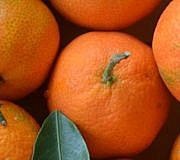 Mandarine, Clementine - wo ist der Unterschied?