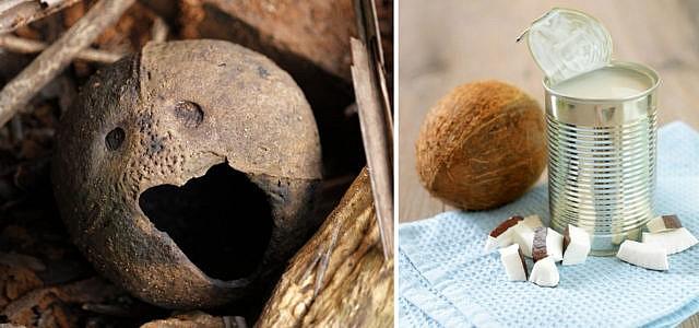 Nährwerte Kokosmilch gesund