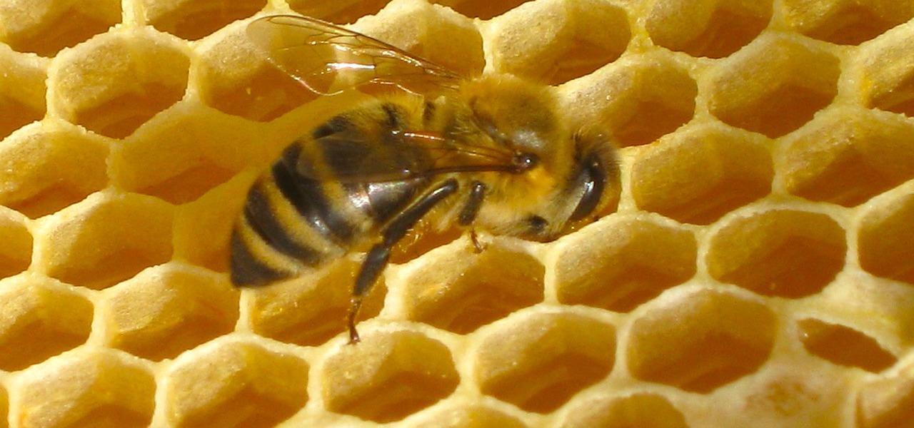 Bienenwachs Biene Bienenwabe