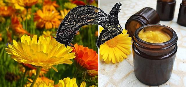 Ringelblumensalbe selber machen Calendula