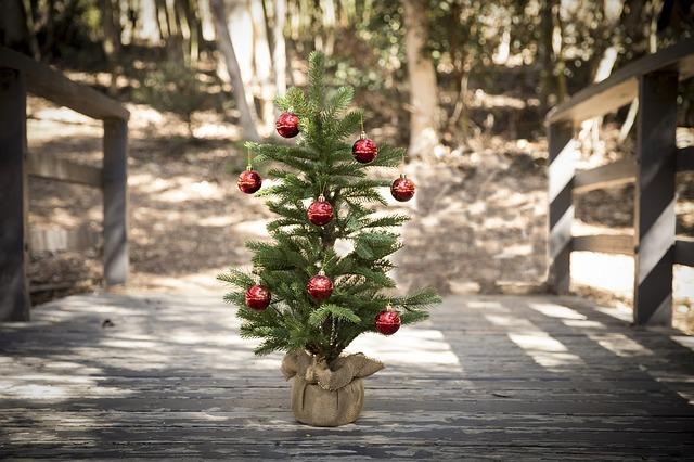 weihnachtsbaum entsorgen sammelstelle biom ll oder verwertung. Black Bedroom Furniture Sets. Home Design Ideas