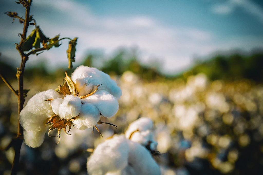 Bei Baumwolle immer auf Bio-Qualität achten.