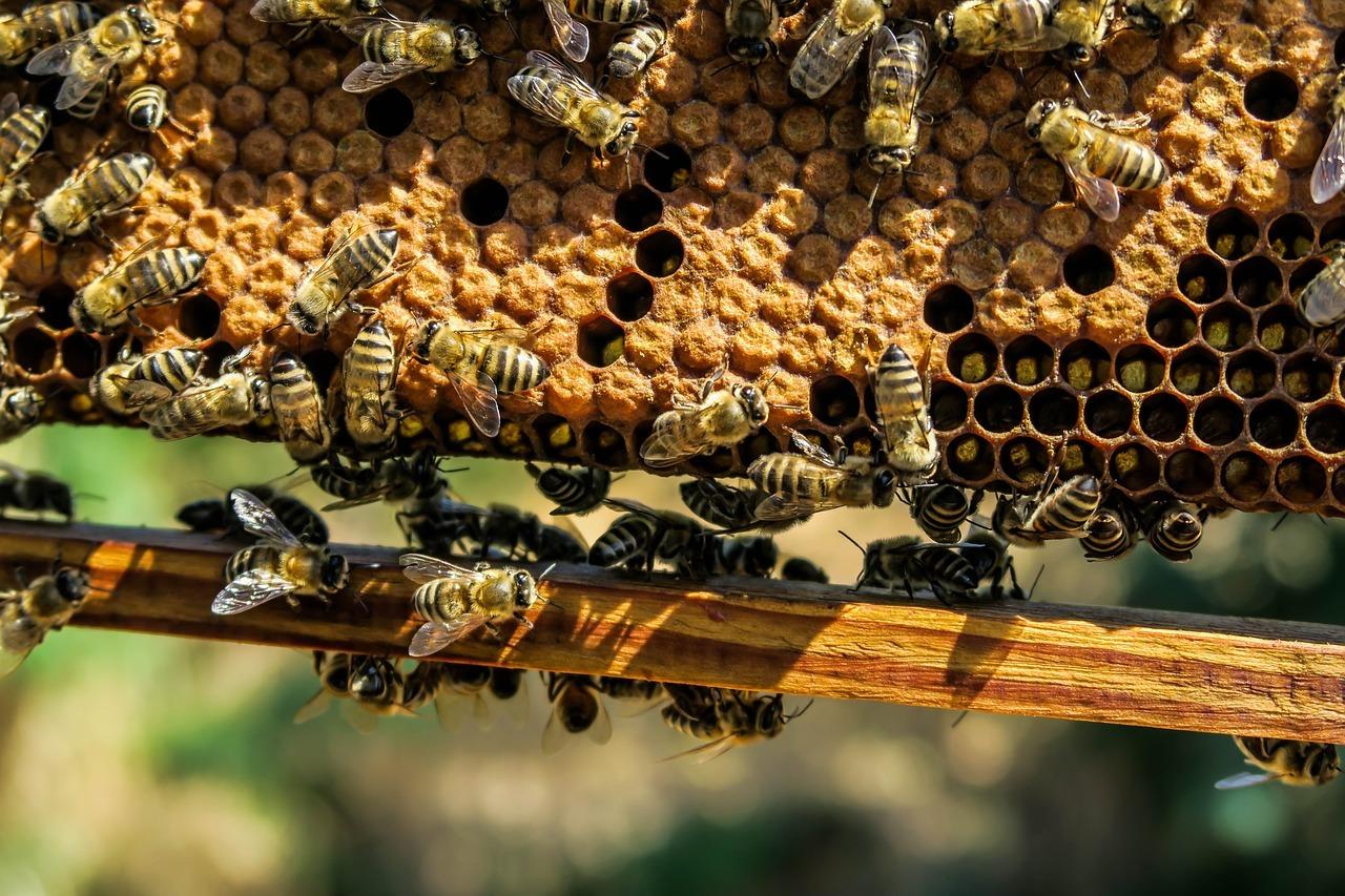 Die wesensgerechte Haltung von Bienen liegt Wildwax besonders am Herzen.