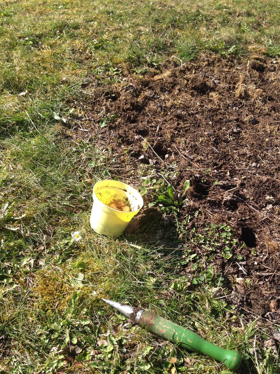 Für Steckzwiebeln Löcher mit einem Pflanzstock vorbereiten