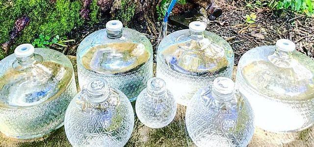 Rohes Wasser Live Water