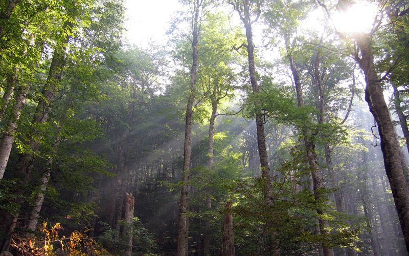 Urwald im Nationalpark Biogradska Gora, Montenegro