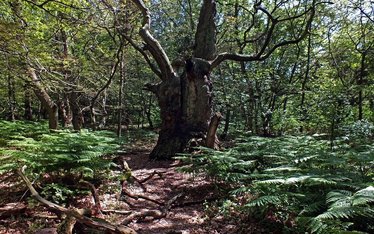 Urwald auf der Insel Vilm