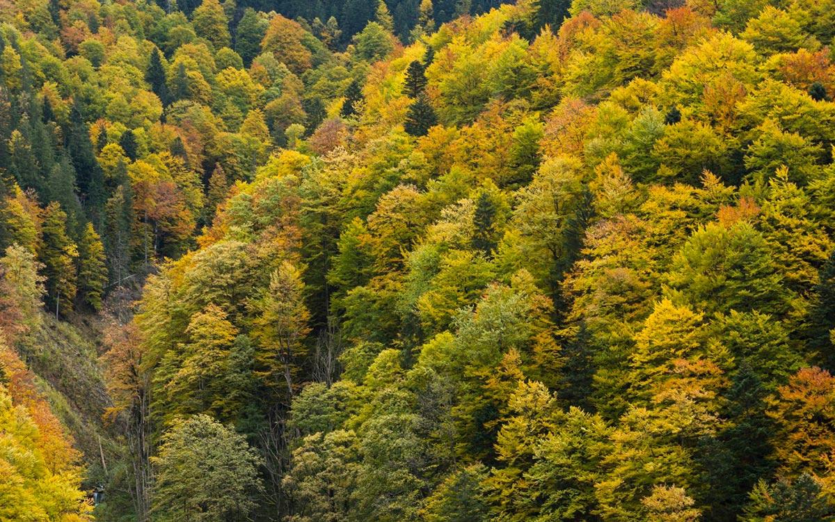 Urwald im Retezat Nationalpark in Rumänien, Karpaten