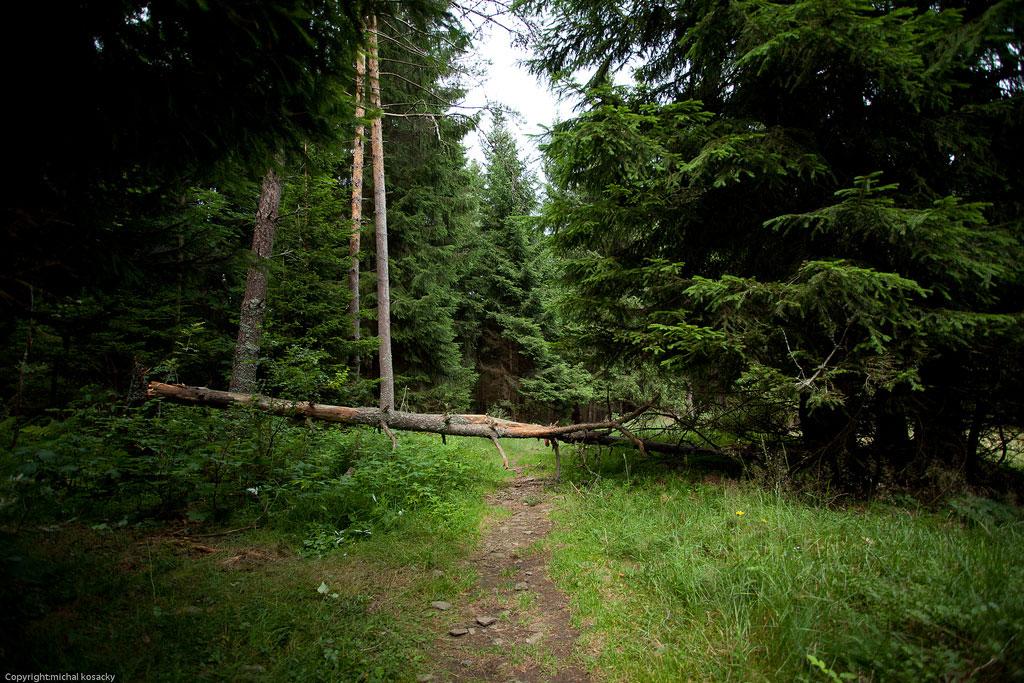 Urwald: Biosphärenreservat Sumava, Tschechien
