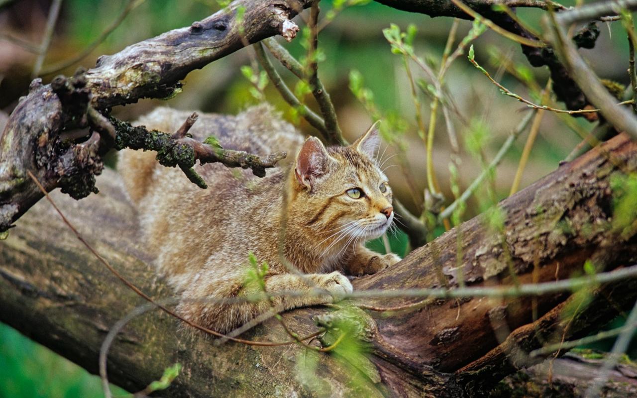 Urwald im Nationalpark Hainich