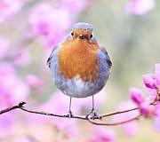 Vögel anhand von Vogelstimmen erkennen