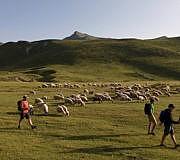 Abseits der Wege mit Schafen auf der Via Dinarica unterwegs (Albanien)