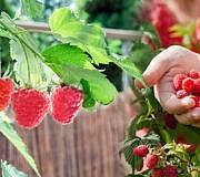Obst auf dem Balkon
