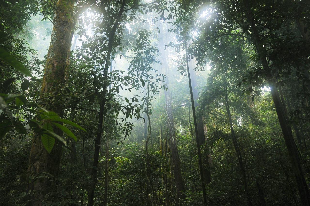 Besonders betroffen: Der tropische Regenwald