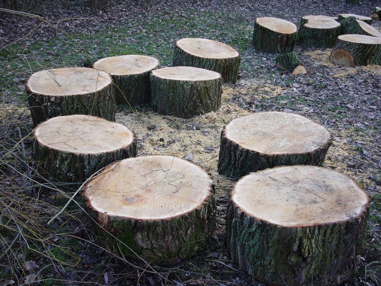 kratzbaum selber bauen einfaches katzenspiel aus naturmaterialien. Black Bedroom Furniture Sets. Home Design Ideas