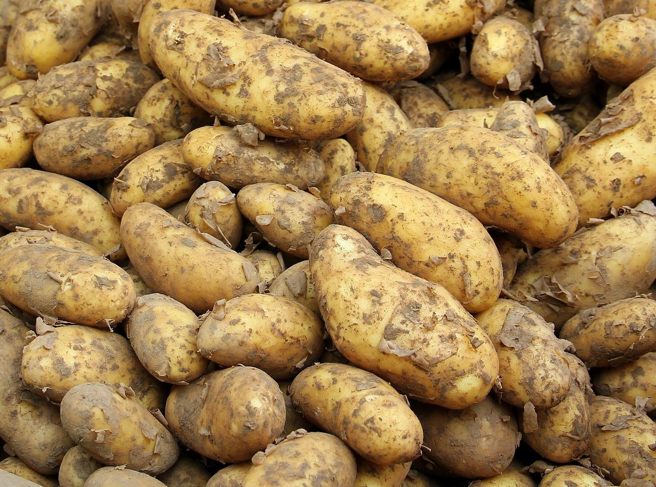 Kartoffeln sind kalorienarm, haben viele gesunde Inhaltsstoffe und sättigen langanhaltend.
