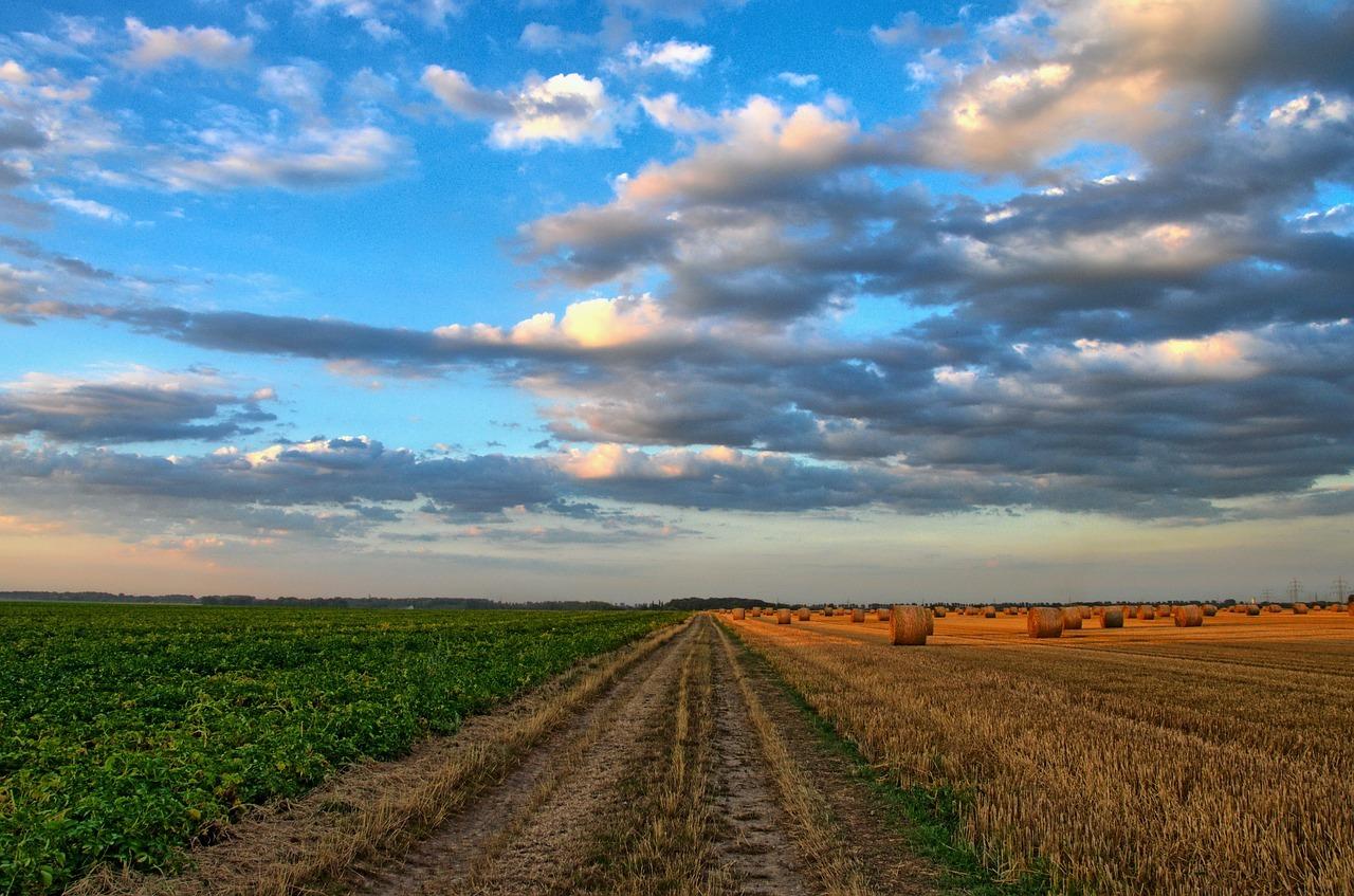 Landwirtschaft bringt viele Probleme mit sich.