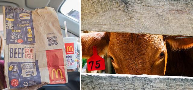McDonalds Schlachthof