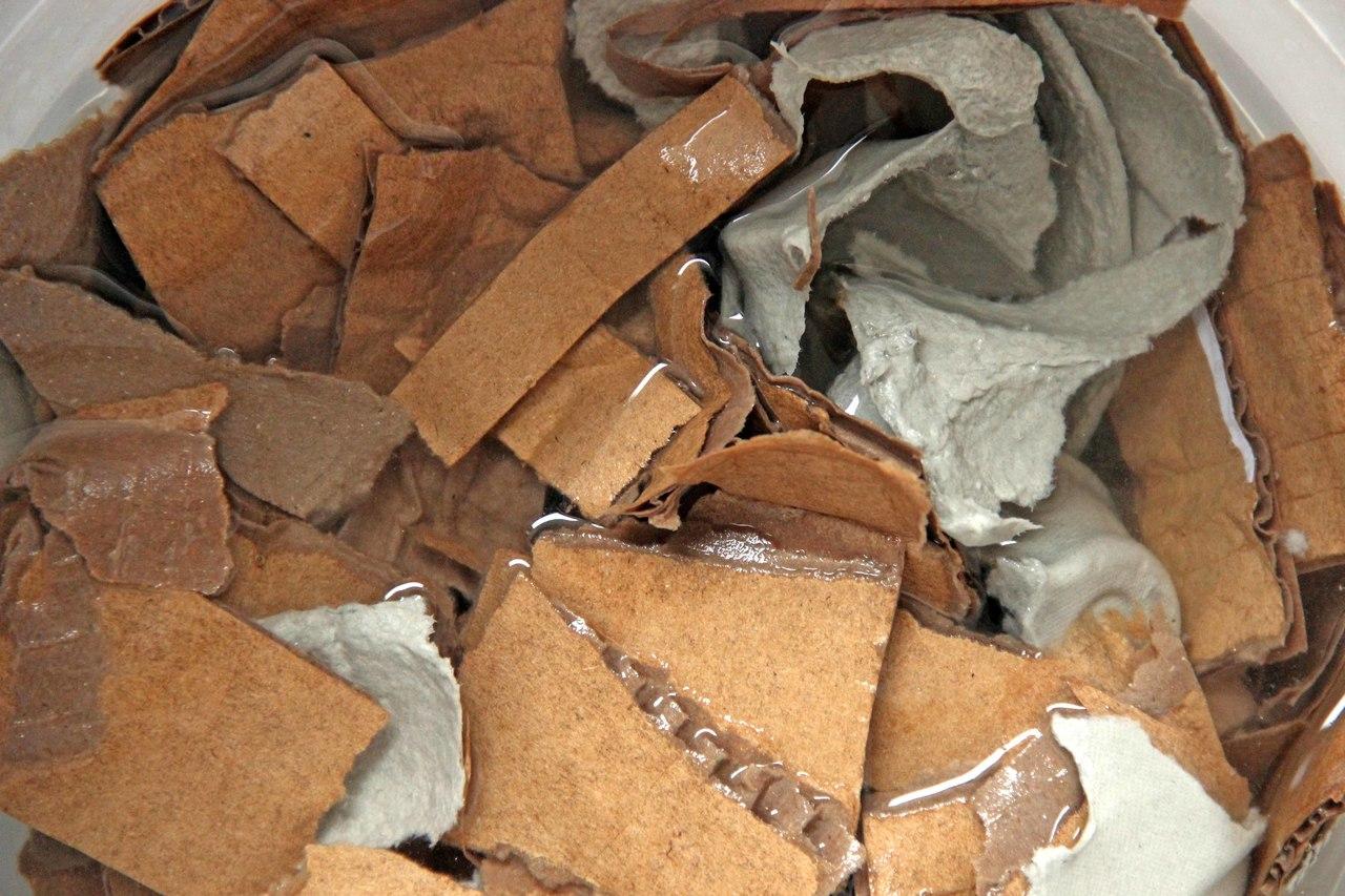 Papier enthält für die Würmer wichtigen Kohlenstoff.