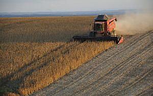 Soja wird in Monokulturen angebaut.