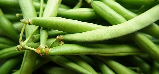 Stangenbohnen versprechen eine reiche Ernte