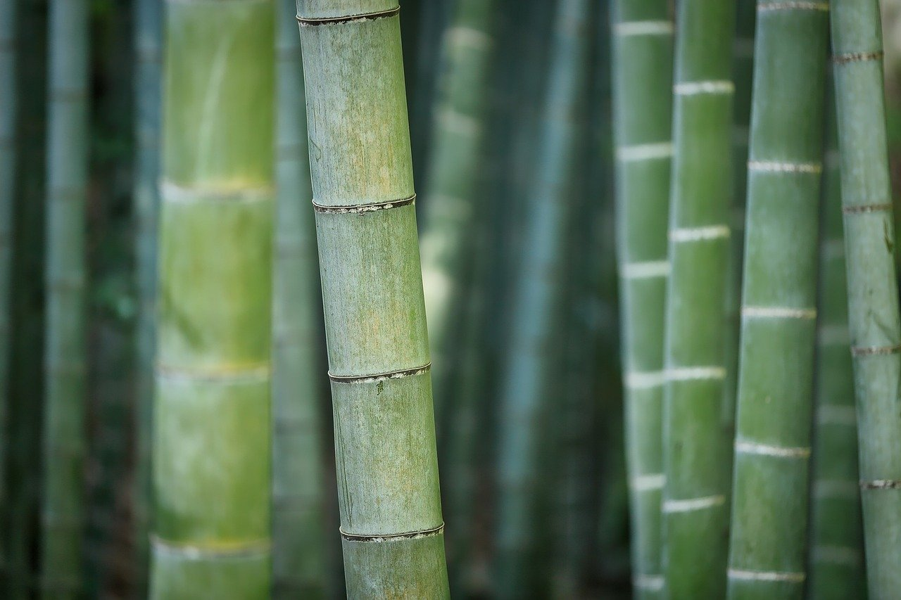 Strohhalme aus der Natur: Bambus