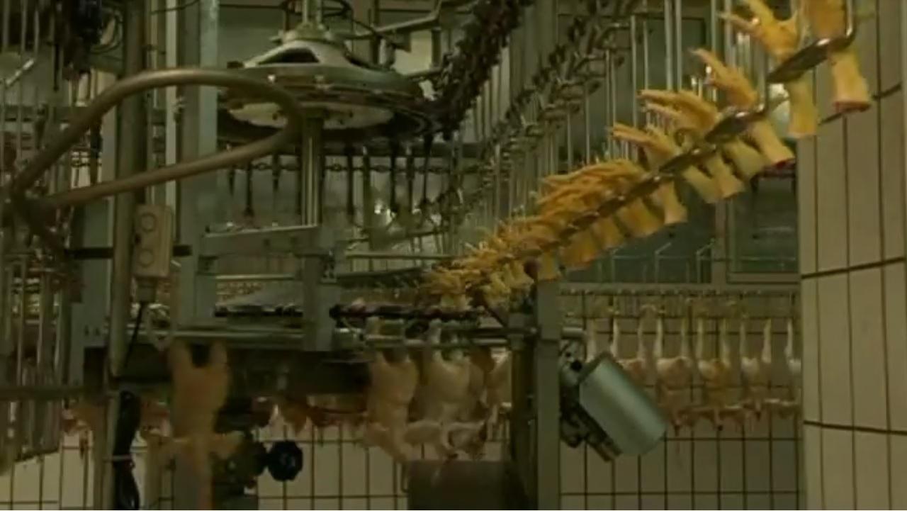 We feed the world: Doku über die Massenproduktion
