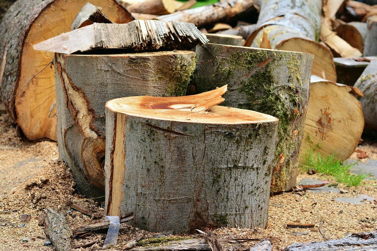 Baum fällen - worauf achten?