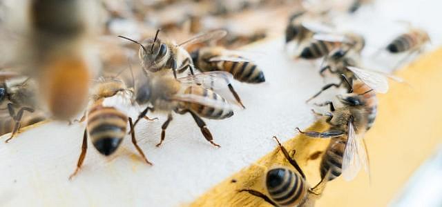 Bienensterben: Appell an die Bundesregierung