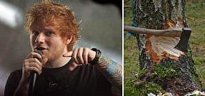 Baumfällungen für Ed Sheeran Konzert?