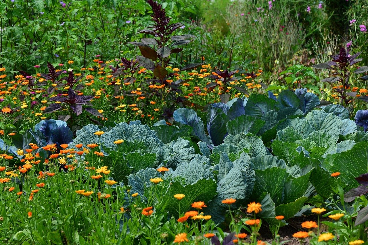 Lege dir einen Permakulturgarten zu, um möglichst nachhaltig zu gärtnern.