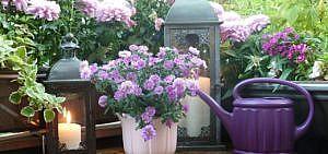 Pflanzen, Balkon