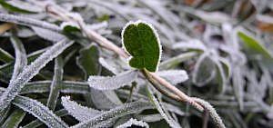 winterfeste kräuter