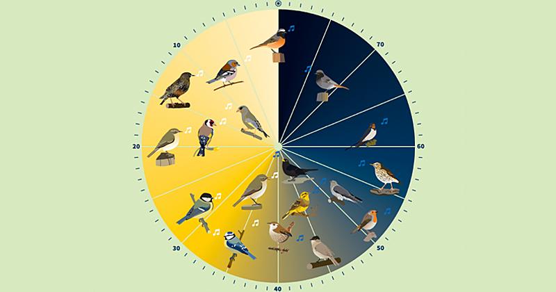 Vogelstimmen anhören